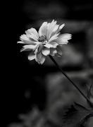 "30th Jun 2020 - ""Where Flowers Bloom..."