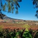 Views of the winelands