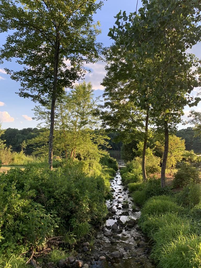 A River Runs Through by blackmutts