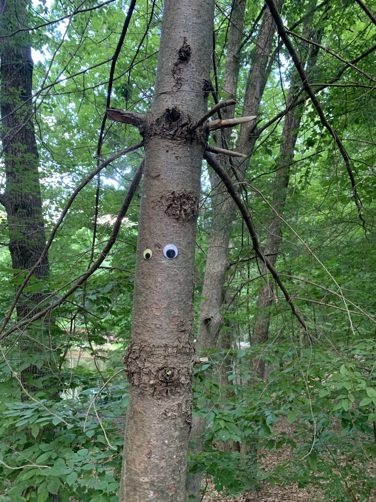 The Trees Have Eyes by blackmutts