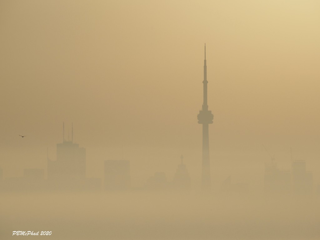 Lost in the Mist by selkie