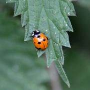 1st Jul 2020 - Ladybird