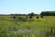 2nd Jul 2020 - countryside