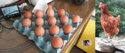 1st Jul 2020 - eggsies