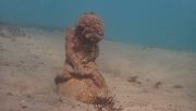 22nd Jun 2020 - Underwater angel