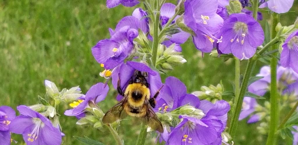 Pollinator by schmidt