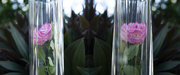 29th Jun 2020 - glass