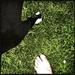 White feet