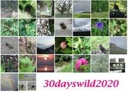 1st Jul 2020 - 30 days wild month June 2020