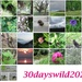 30 days wild month June 2020