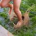 Wonderful Mud Puddle