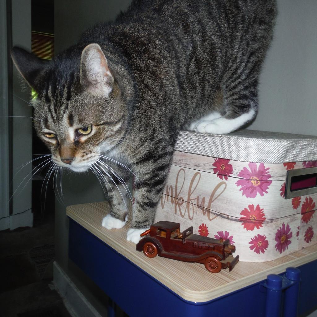 Was It a Car or a Cat I Saw? by spanishliz