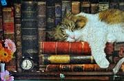2nd Jul 2020 - Cat nap.......