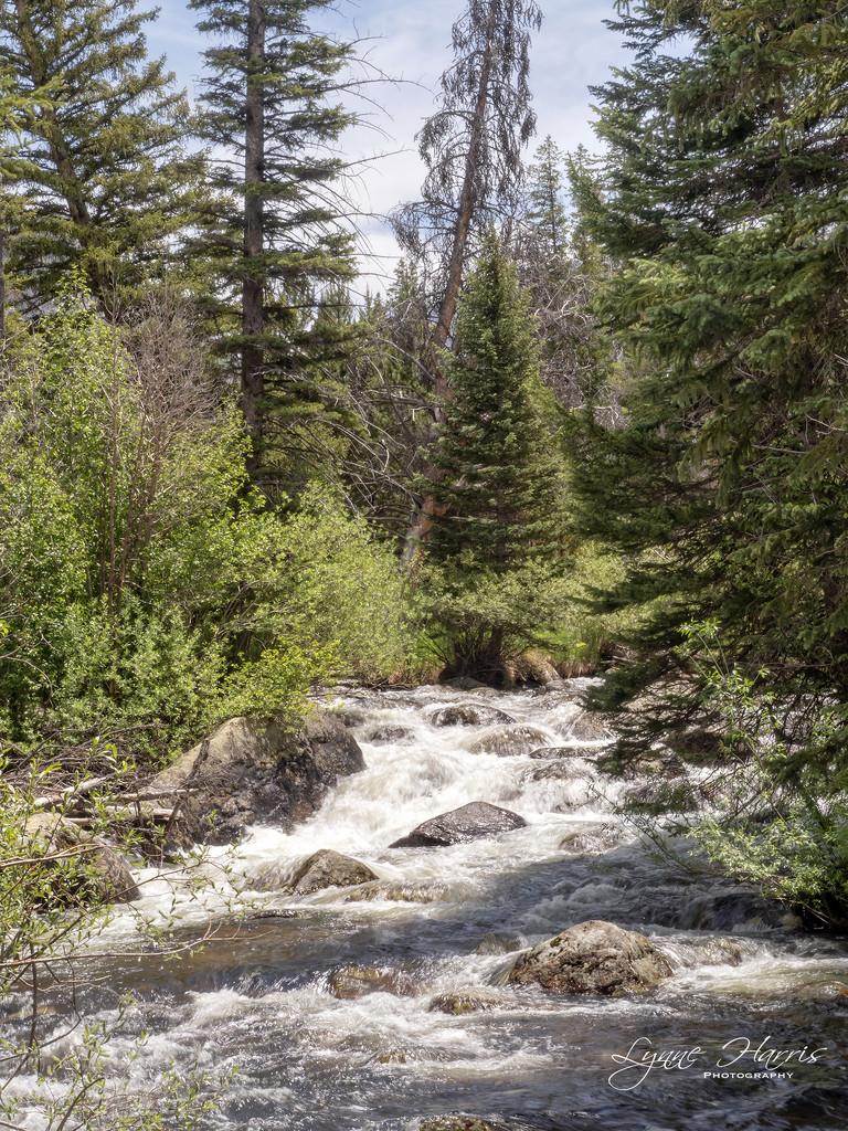 Colorado Hike by lynne5477