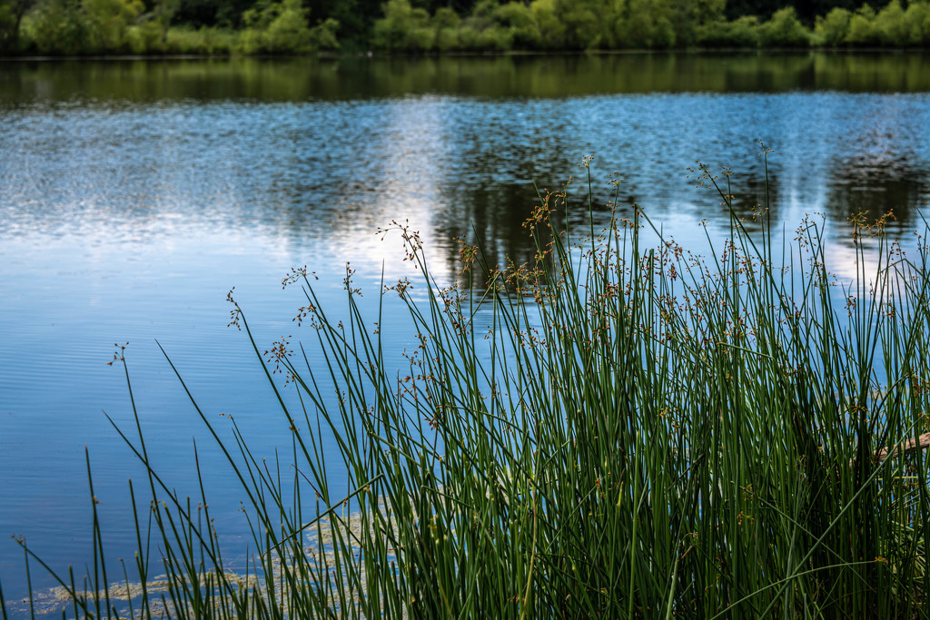 Lakeside Brush by marylandgirl58
