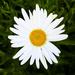 daisy, I think