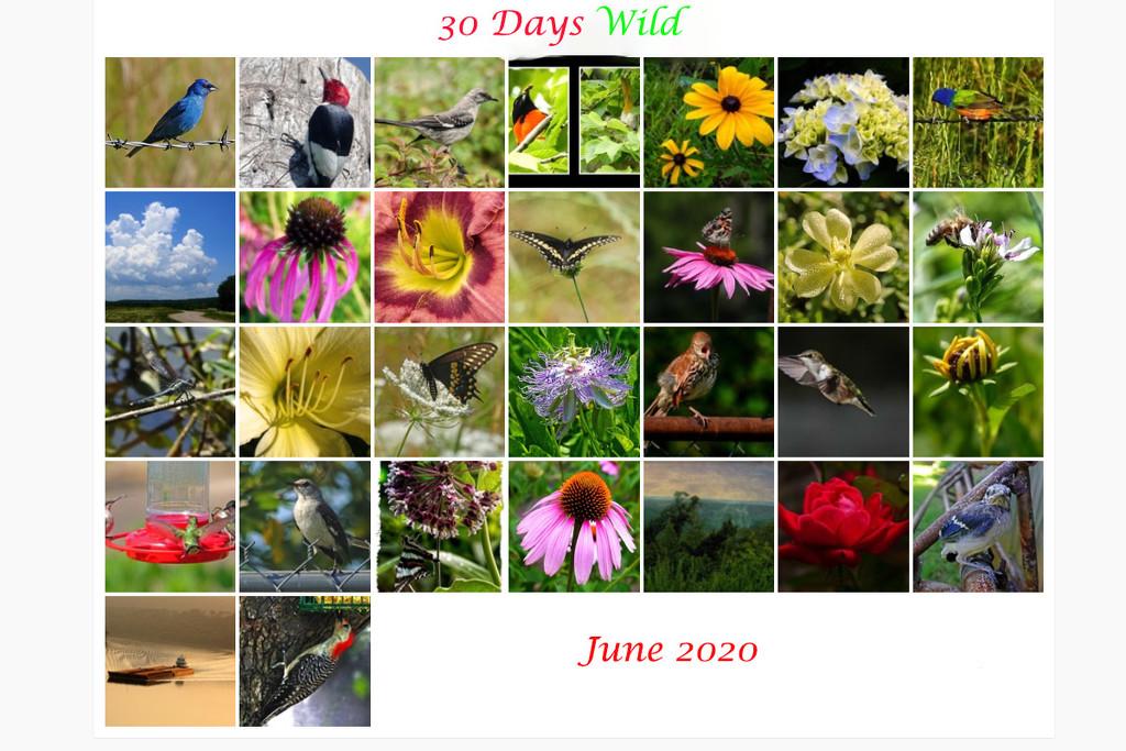 30 Days Wild Calendar by milaniet