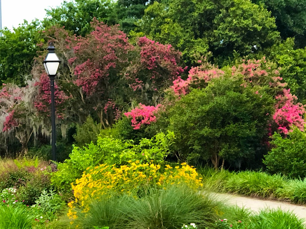 The gardens at Hampton Park by congaree