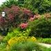 The gardens at Hampton Park