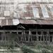 Old Barn #5355