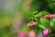 3rd Jul 2020 - Summer Bokeh