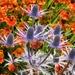 Botanical drama
