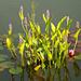 water plants by gijsje