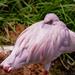 Flamingo Friday '20 19