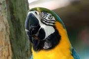 21st Jun 2020 - Macaw