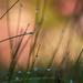 Grass by yorkshirekiwi