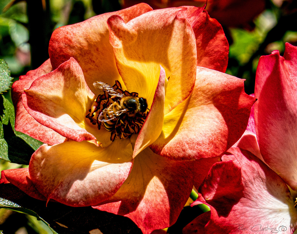 Pollen Mining by stray_shooter