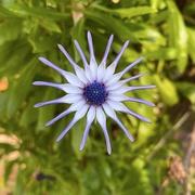 5th Jul 2020 - Flower