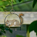 Plated Squirrel