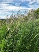 5th Jul 2020 - Peeking Through The Grass