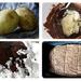 Potato Fudge