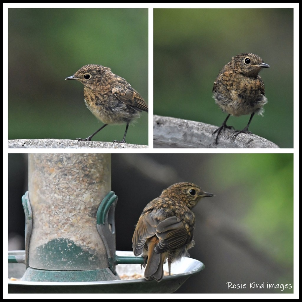 Baby robin today by rosiekind
