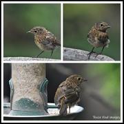 6th Jul 2020 - Baby robin today