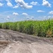 Miles and miles of sugarcane