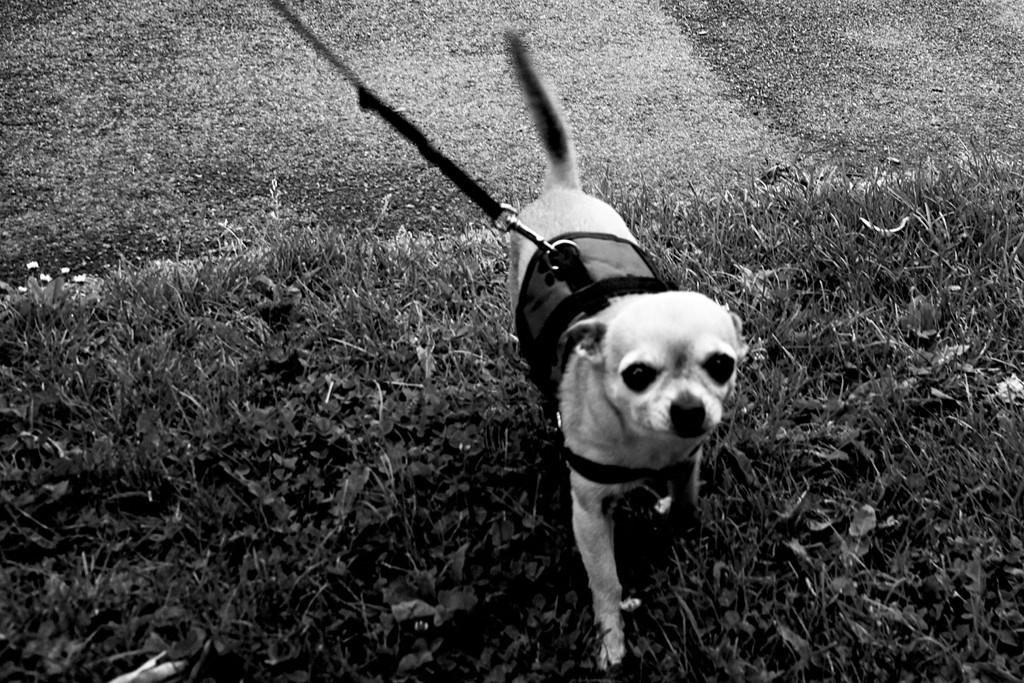 Miniature dog by allsop