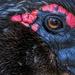Duck Eye 7.6.20