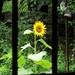 A Window Somewhere