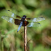 Dragonfly Posing by marylandgirl58