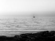 7th Jul 2020 - adrift at dawn...