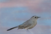 7th Jul 2020 - catbird