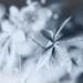2020-07-08 passiflora leaf