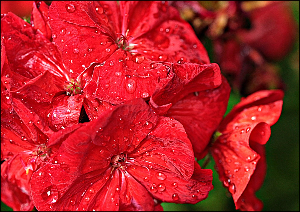 After the Raindrops Fall by olivetreeann