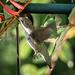 Hummingbird Series 2 by marylandgirl58