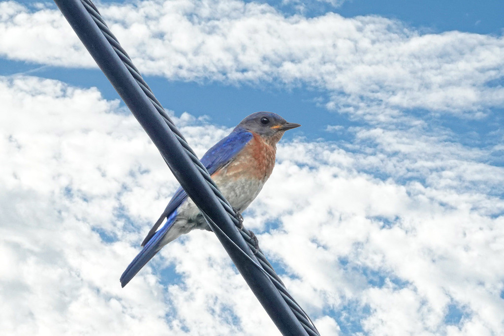 Guess This is a Bluebird Sort of Day by milaniet