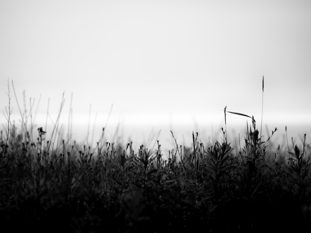 grass by northy