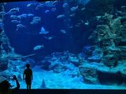 9th Jul 2020 - Big aquarium, small fishes.